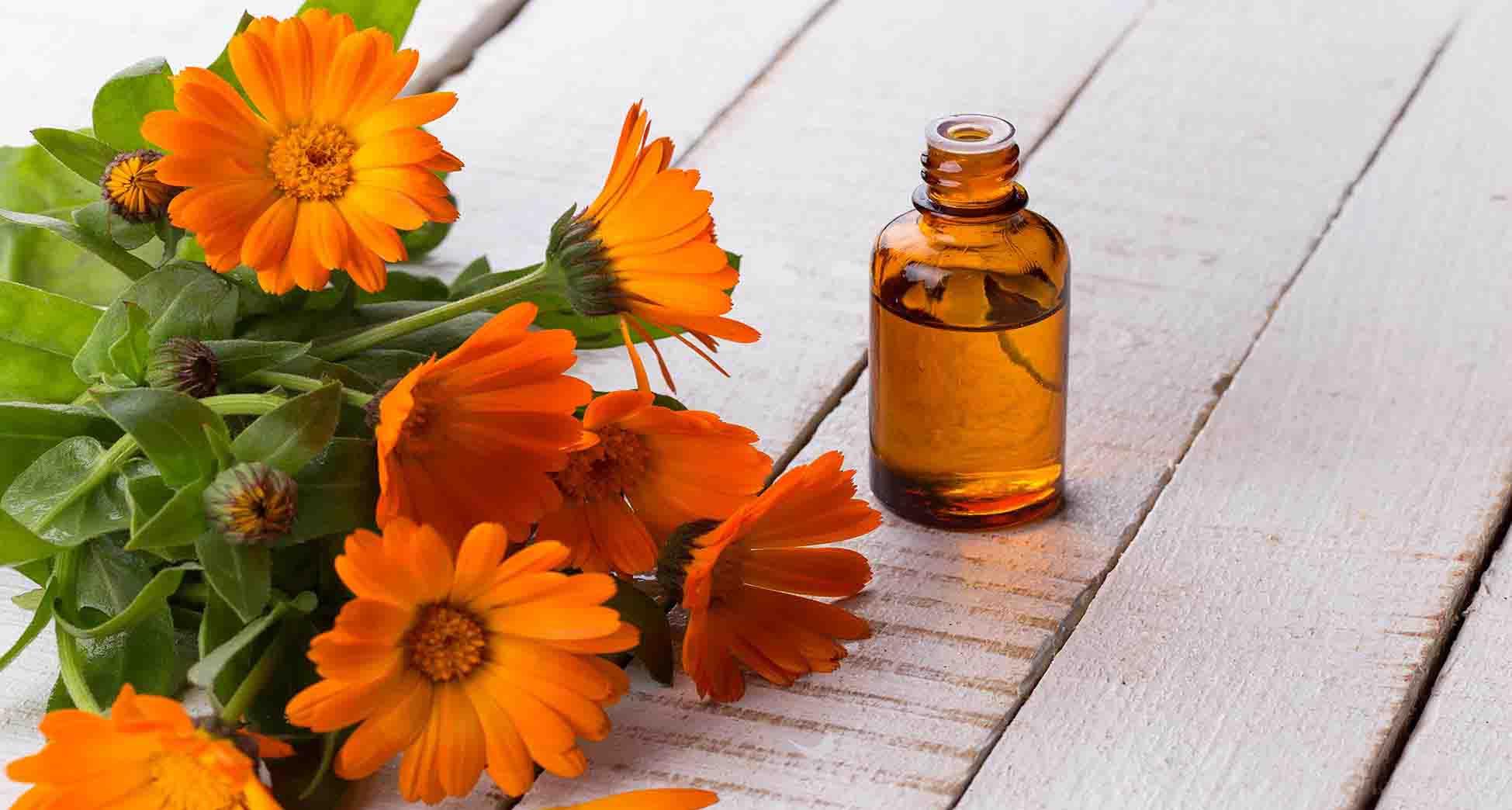 aceite esencial calendula propiedades
